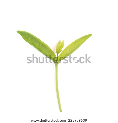 Young green sprout with leaf isolated on white background - stock photo