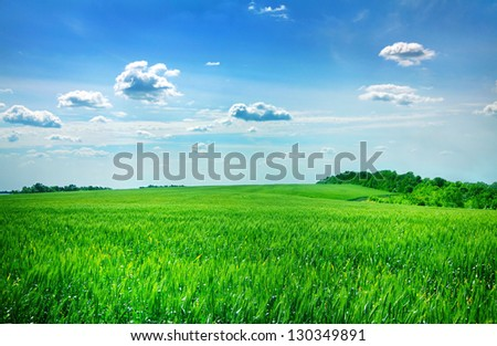 Young green wheat field with sky - stock photo