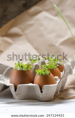 Young greens grown in the eggshell - stock photo