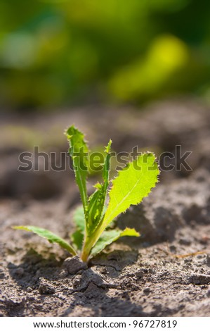 Young growing plant in a desert sand