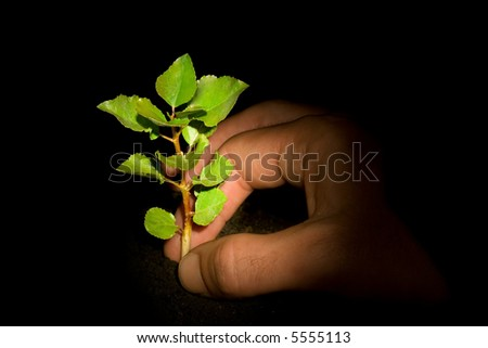 Young growing tree with a hand planting it. Illuminated by a light spot. - stock photo