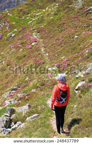 Young hiker woman walks a trail on the mountain side amongst red flowers - stock photo