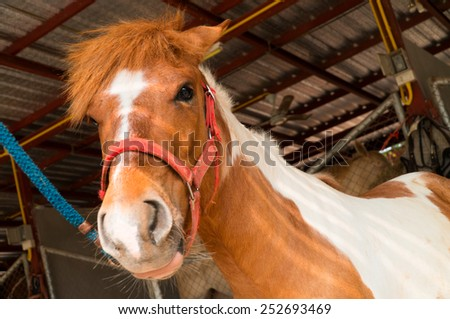 Young horse in farm - stock photo