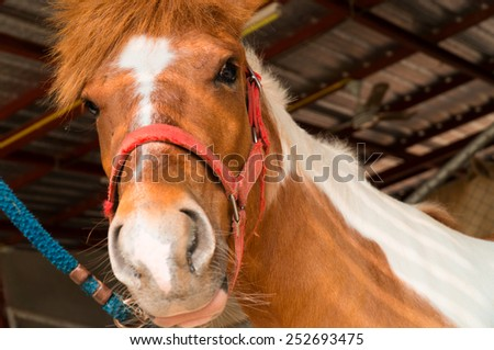 Young horse in farm