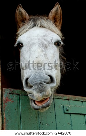 Young horse in its paddock. - stock photo