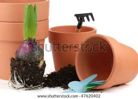 Young hyacinth with clay pot and soil on white background