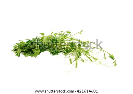 young ivy gourd leaves isolated on white background - stock photo