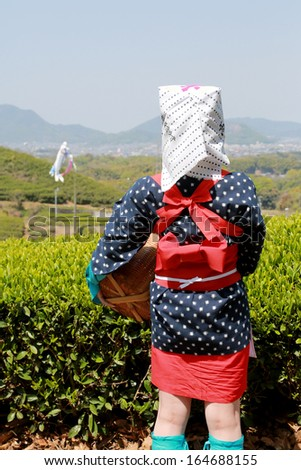 Young japanese tea picker with traditional clothing kimono, back view  - stock photo
