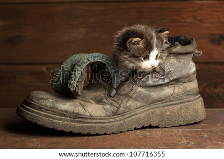 young kitten in old boot - stock photo