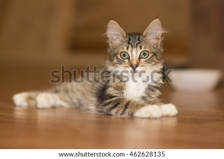 Young kitten is lying on the floor lifting ears