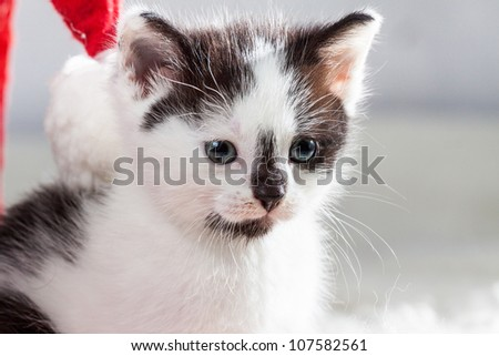Young kitten next to santa hat