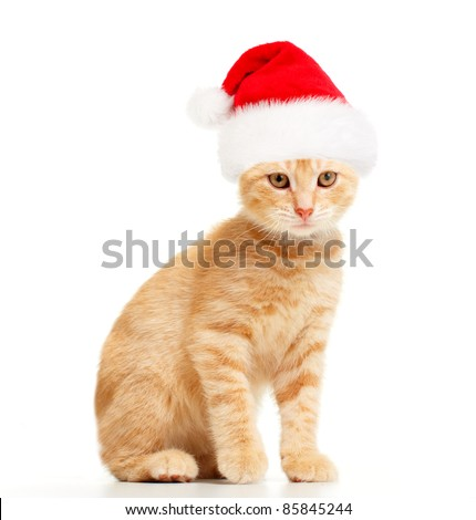 Young kitten with christmas santa cap. Isolated over white background. - stock photo