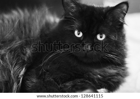 Young kittie lying on sofa and looking at camera, black and white photo - stock photo
