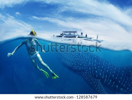 Young lady snorkeling in tropical sea with gigantic whale shark ( Rhincodon typus) - stock photo