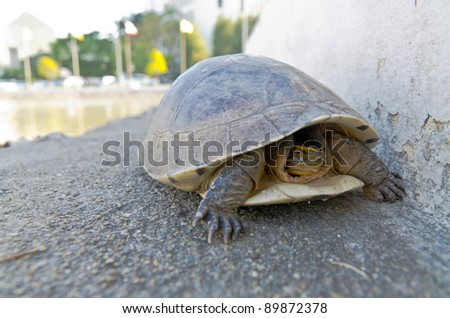young land turtle escape from hot - stock photo