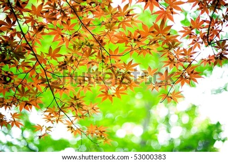 Young leaves - stock photo