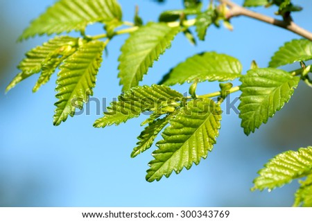 young leaves against the sky - stock photo