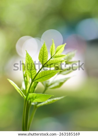 Young leaves close-up with blurred background - stock photo