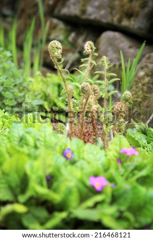 Young leaves of ferns with spring flowers in rustic style garden. - stock photo