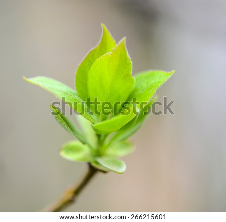 Young leaves on a tree - stock photo