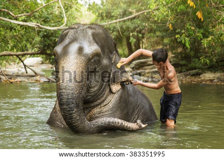 Young mahout cleaning elephant in the river. - stock photo