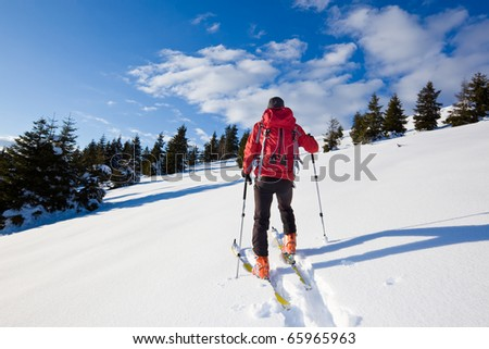 Young male backcountry skier moving up in a snowy woods of pine.