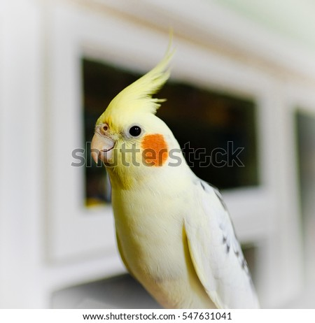 Opinion you Cockatiel sitting at bottom of cage opinion