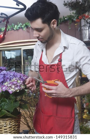 Young male florist cutting hydrangea in flower shop - stock photo