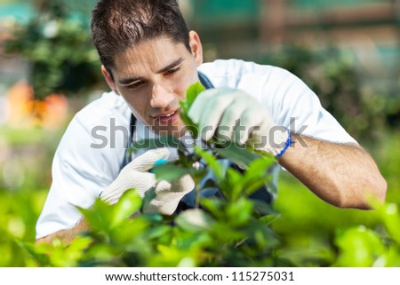 young male gardener working in greenhouse - stock photo
