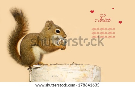 Young male squirrel holding on lovingly to a tiny antique picture frame with a picture of his sweetheart in it. - stock photo