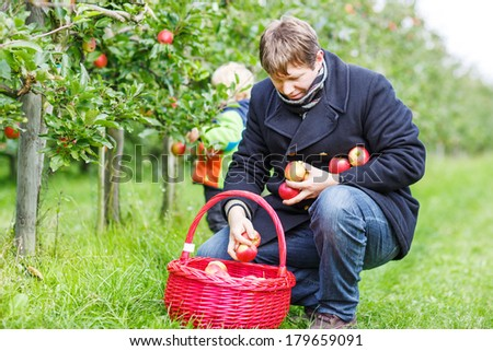 Young man picking red ripe apples in fruit garden with his little son on background, outdoors. - stock photo