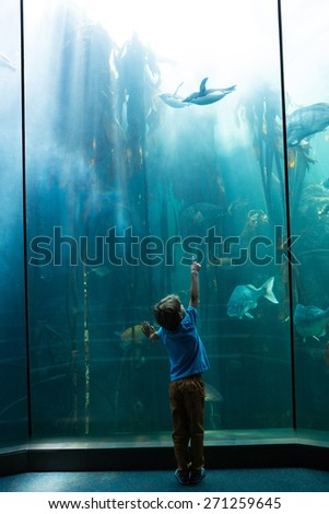 Young man pointing a penguin with his finger at the aquarium - stock photo