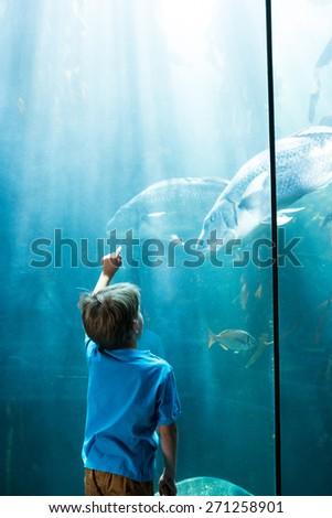 Young man pointing fish in a illuminate tank at the aquarium - stock photo