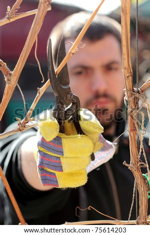 Young man pruning grape in a vineyard selective focus on hand - stock photo