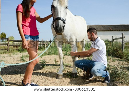 young man veterinary doing medical examination on beautiful white and gray camargue horse - stock photo