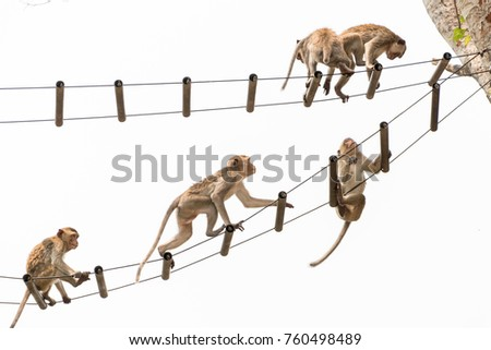 Young monkeys hanging on rope ladder; Naughty monkeys playing on rope ladder happily.