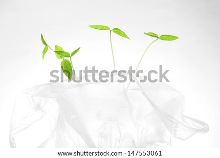 Young mung bean sprouts in white plastic bag - stock photo