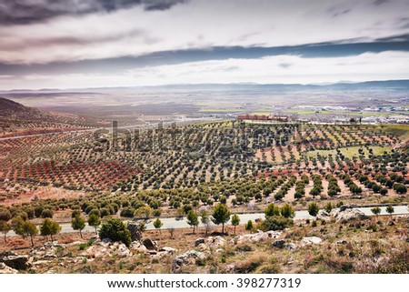 Young olive plantation. Sustainable organic farming on the mountainside. Mountain landscape in summer, countryside. - stock photo
