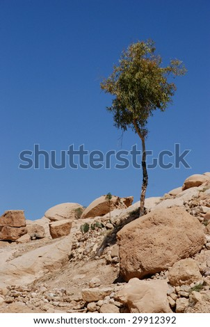 Young olive tree on a mountain - stock photo