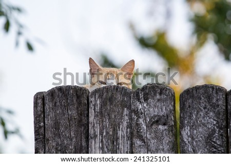 Young orange cat, scared, behind the fence - stock photo