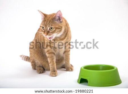 Young orange tabby house cat looking looking hostile with it's mouth open showing teeth. Sitting near green food bowl. Isolated against white background.