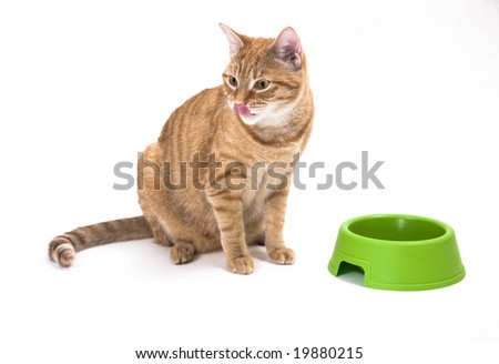 Young orange tabby house cat sitting near empty bowl and licking it's nose after a delicious meal. Isolated against white background.