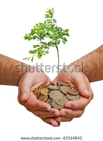 Young orange tree in hands - stock photo