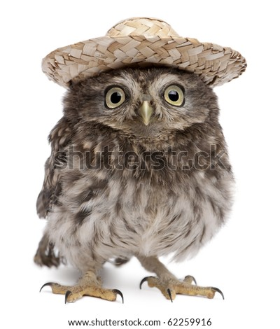 Young owl wearing a hat in front of white background - stock photo