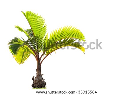 Young palm tree - stock photo