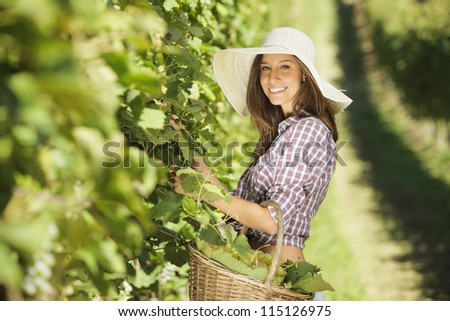 Young peasant woman in the vineyard - stock photo