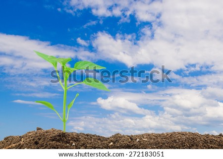 Young pepper seedling on the blue sky background