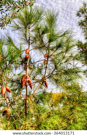 Young pine cones on branches photographed against blue sky with light clouds - stock photo