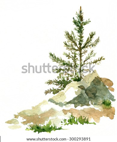 young pine trees and rocks drawing by watercolor, aquarelle sketch of wild nature, painting forest, hand drawn artistic  illustration