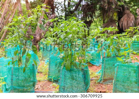 Young plant a tree in agricultural farm. - stock photo